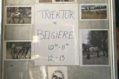 Skiltets ene side, hvor alle kunne se billeder af belgier hestene