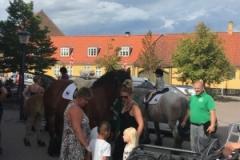 Stella Van Gaasbeek, Dharma Af Skelmosegaard og Vaiolet Af Fløjgård er klar til at give en træktur til alle de fremmødte børn