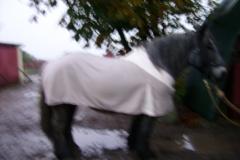 Pløjedag okt. 2008 076